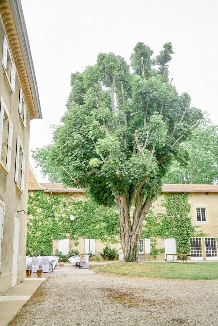 château de joyeuse arbre cour
