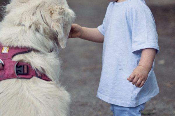 amitié homme chien